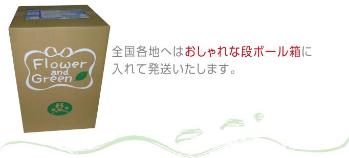 全国各地へはおしゃれな段ボール箱に入れて発送いたします。